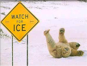 Bear slippin on Ice!