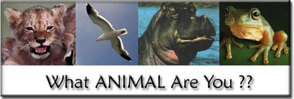 Take the What Animal Are You Test